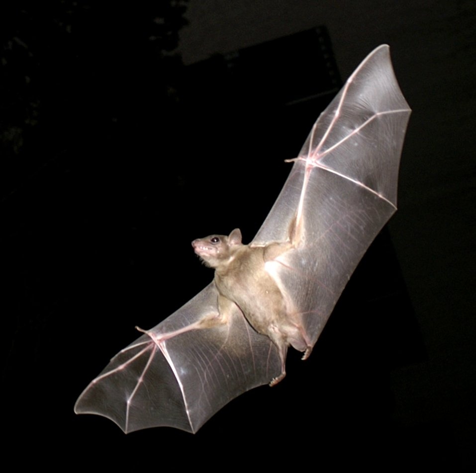 bat removal greater toronto area