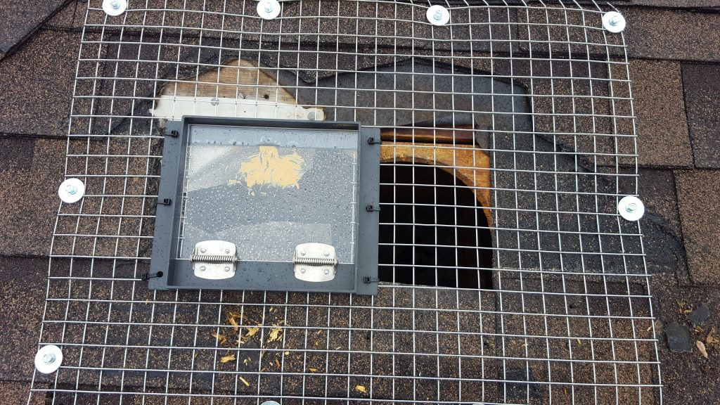 raccoon door markham