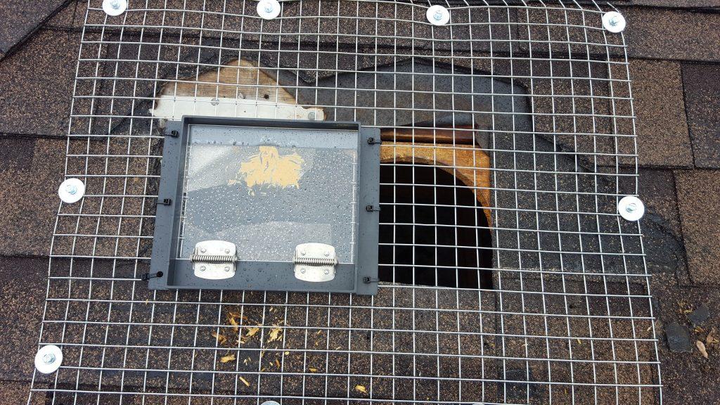 raccoon door markham