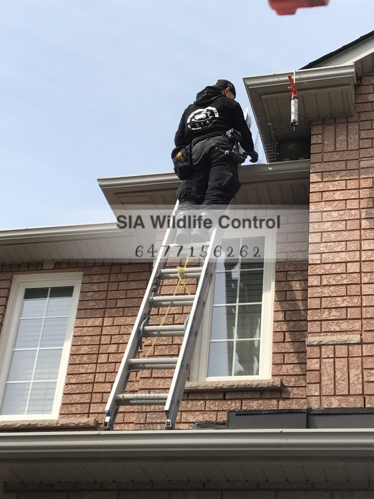 Raccoon Removal In Markham Greater Toronto Area