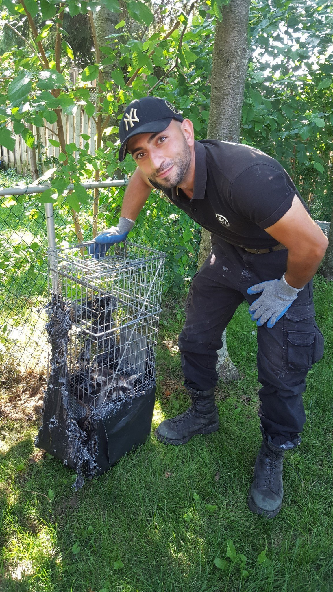 Raccoon Removal North York