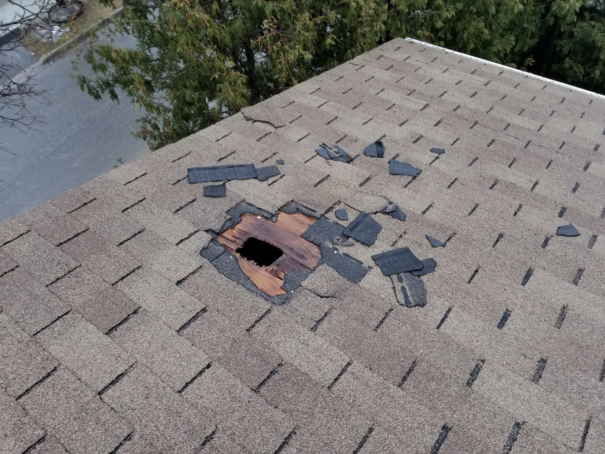 Roof destruction by raccoons