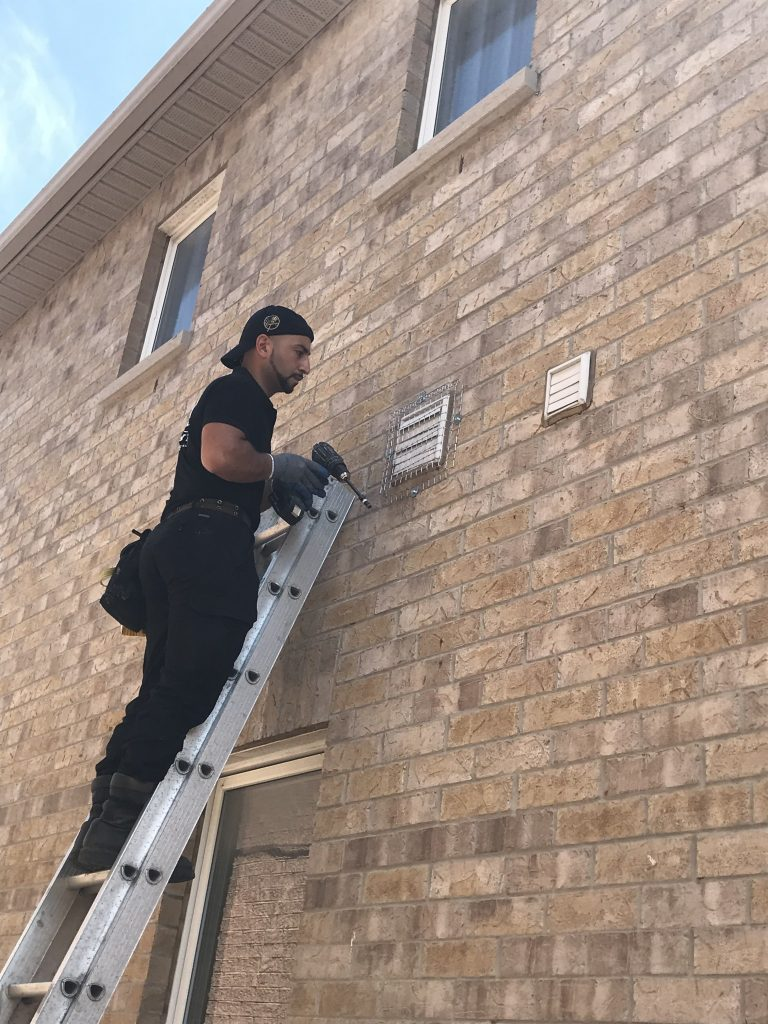 Bird Removal In Newmarket