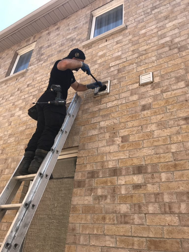 Bird Removal Newmarket