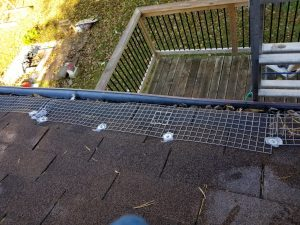 squirrel removal willowbeach roofline