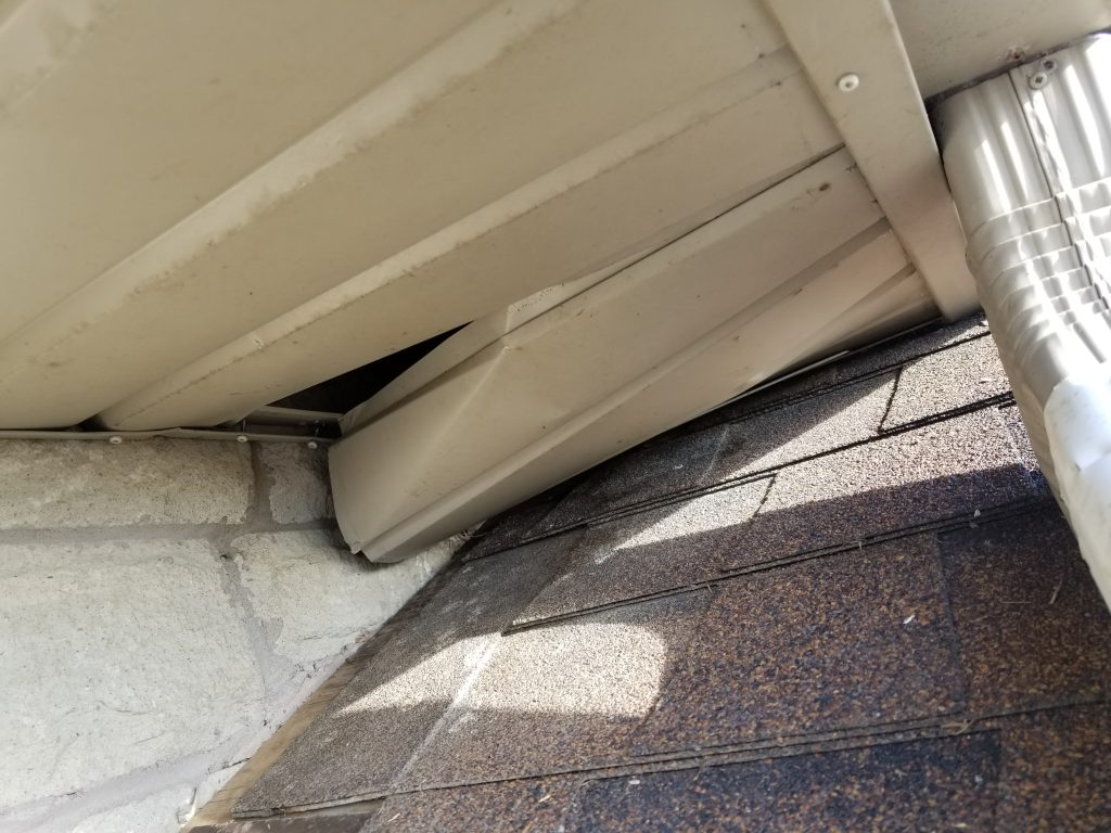 raccoon removal north york soffit entry