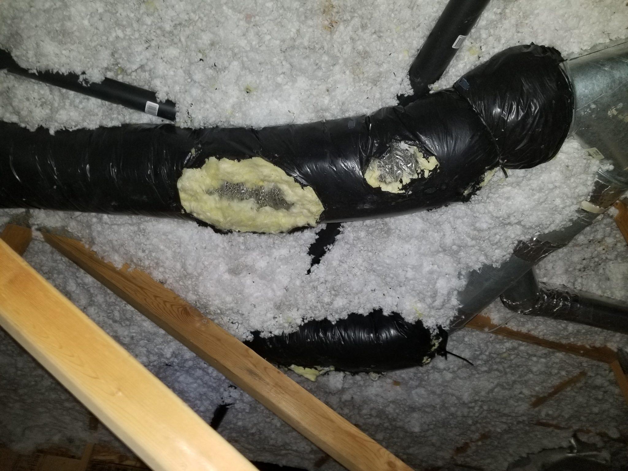 raccoon removal north york damaged vent