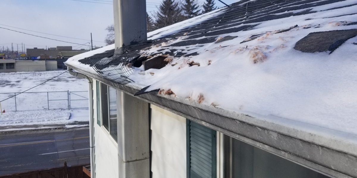 raccoon removal newmarket january 2019