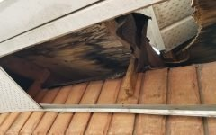 Raccoon Soffit Damage And Removal In Old Plywood In Richmond Hill
