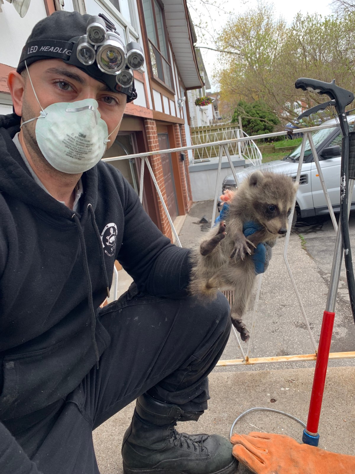 proper raccoon removal - Babies