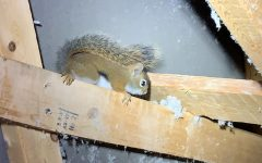 Do squirrels leave on their own?