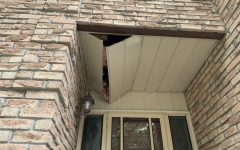 What kind of damage can raccoons do?