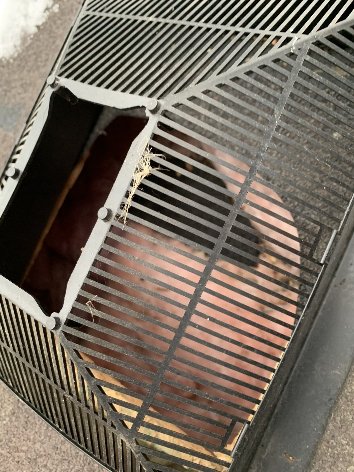 Rodent Fur In Vent Entry Point