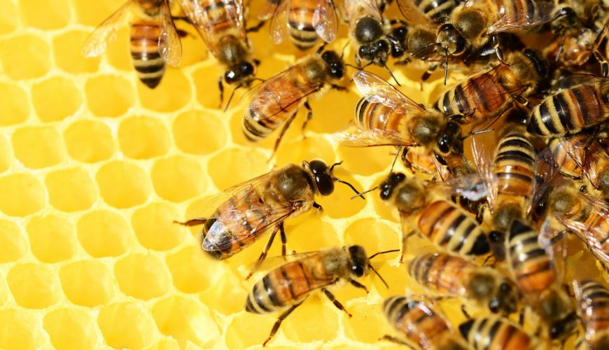 Bee Removal in Toronto & the GTA
